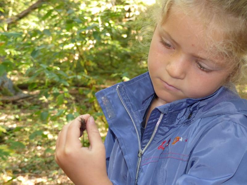 Waldgrille auf Hand